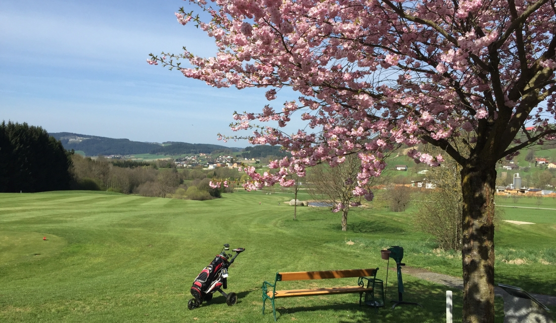 Golfliebling in St. Oswald