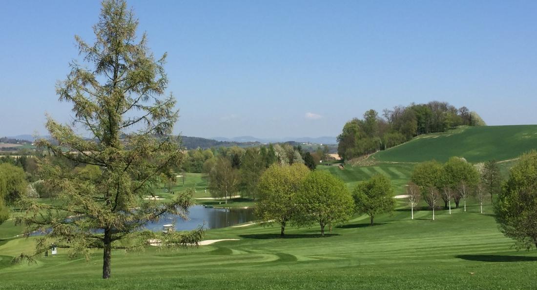 Golfliebling im GC Linz-Luftenberg